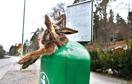 /Global/Nyhetsbilder/2012/april/Hare-i-soptunna-EUbbe2.jpg